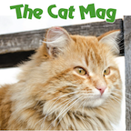 Apple Newsstand The Cat MagCover