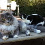 Cisco & Herbert - Movie & Video Reviews - The Cat Magazine