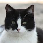 Herbert The Cat Mag
