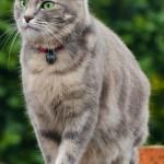 London - Travel Reporter - The Cat Magazine