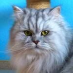 Olivia Ashley-Cooper Columist - The Cat Mag