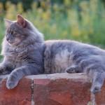 Contibutor - The Cat Magazine