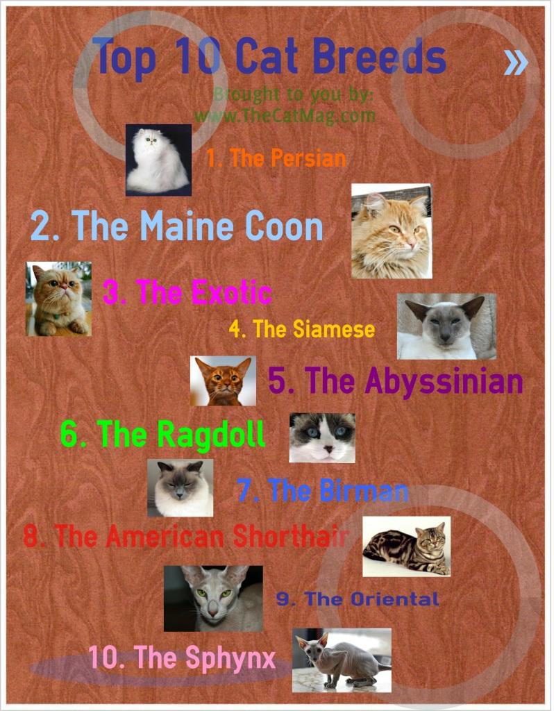 The Cat Mag - Top 10 cat breeds