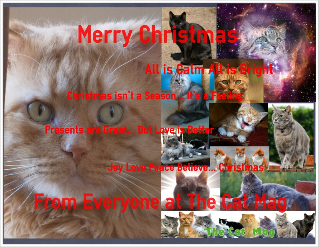 Christmas Greetings fromThe Cat Mag