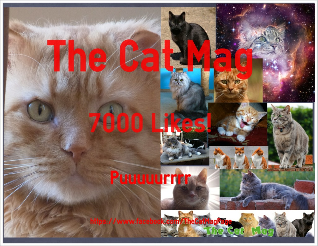 The Cat Mag 7000 Facebook Likes