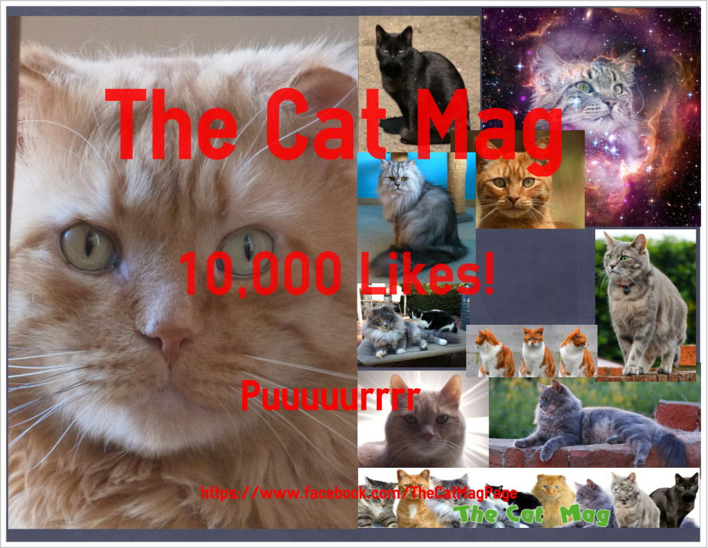 The Cat Mag 10,000 Likes on Facebook