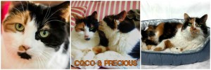 coco & precious