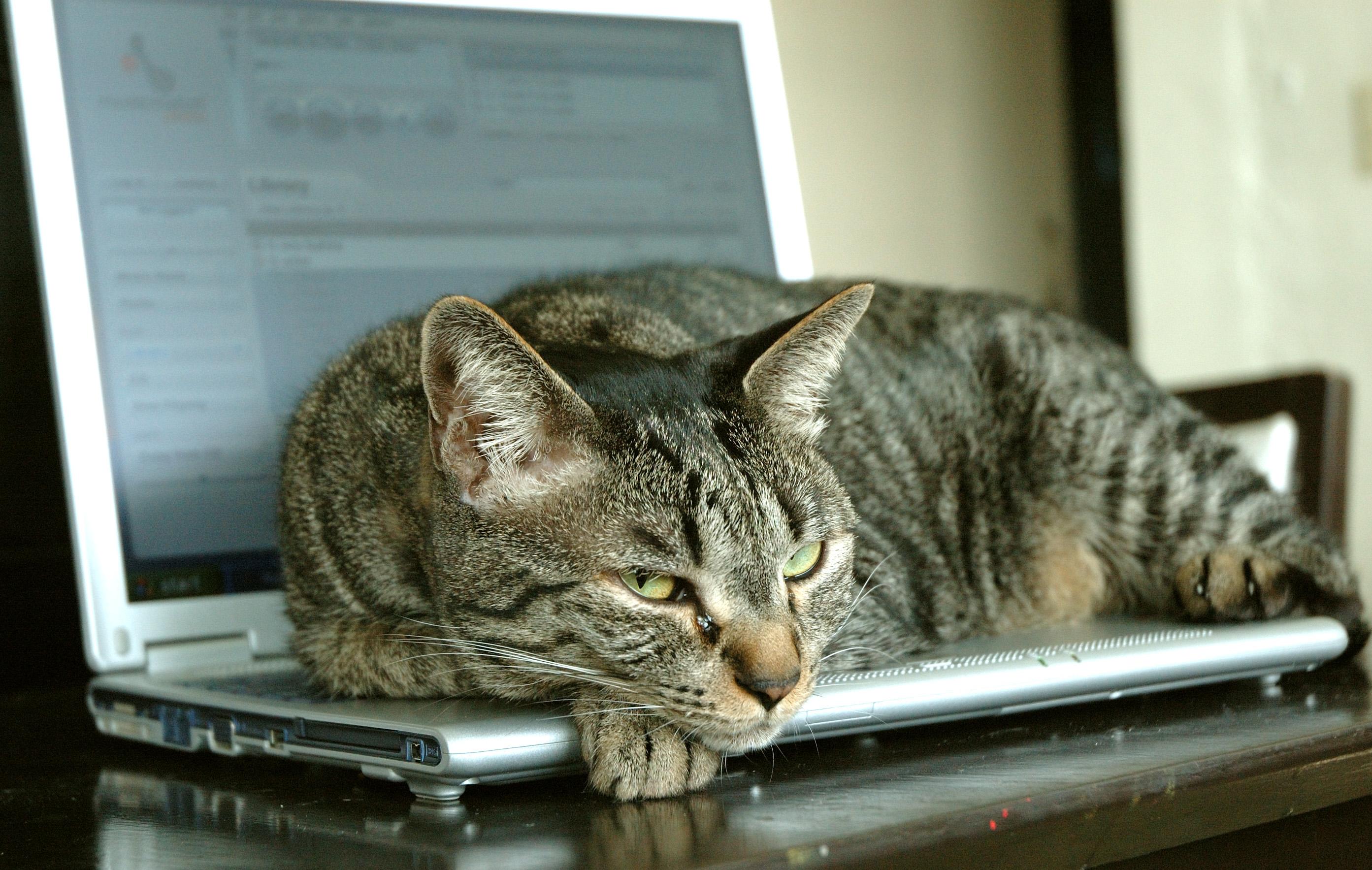 The Cat Mag lap cat